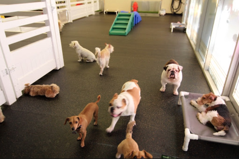 Grooming For Dogs In Corona